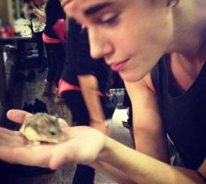justin pet hamster