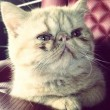 justin pet tuts cat