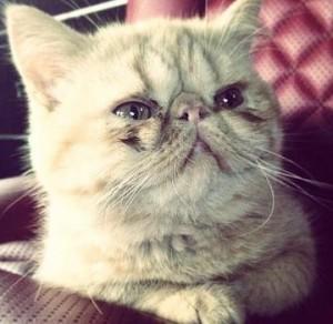justin pet tuts cat
