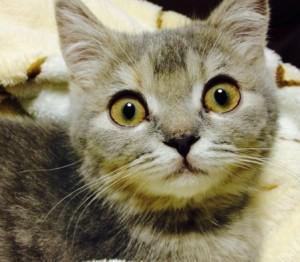 びっくり猫2